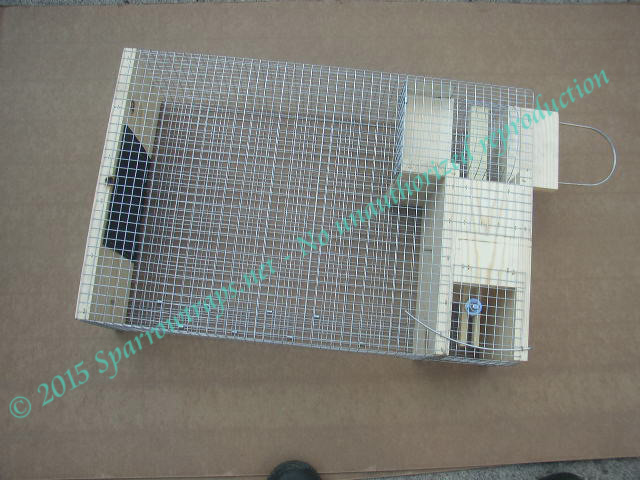 House Sparrow Trap Plans Plans Insect Nic