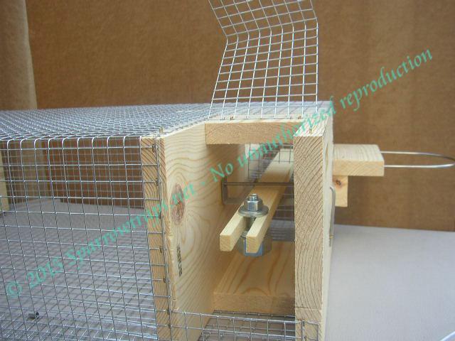 Build Sparrow Trap Plans